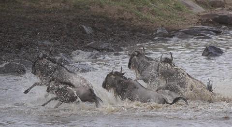 kenya-antelopes-025.jpg