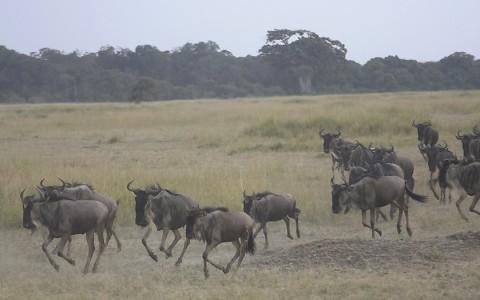 kenya-antelopes-026.jpg