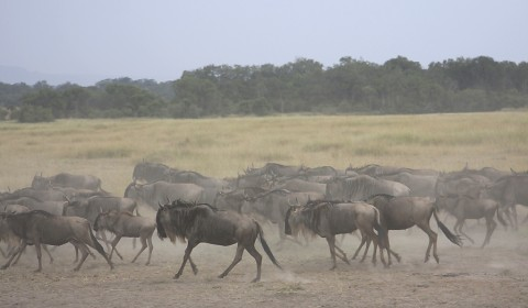 kenya-antelopes-027.jpg