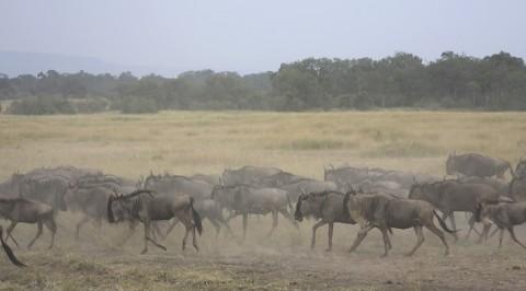 kenya-antelopes-028.jpg