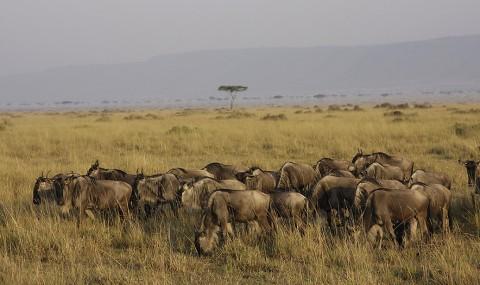 kenya-antelopes-029.jpg