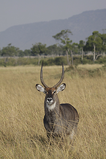 kenya-antelopes-034.jpg
