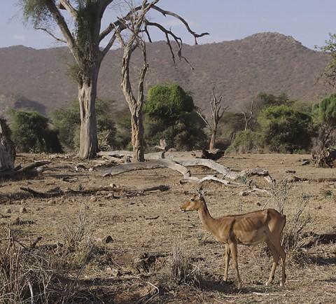 kenya-antelopes-036.jpg