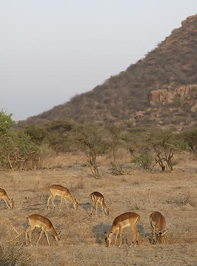 kenya-antelopes-046.jpg