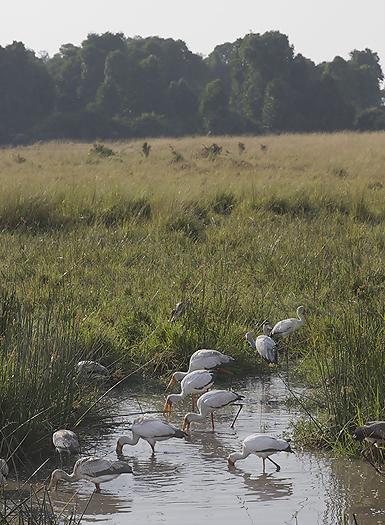 Kenya-HeronsStorks-023.jpg