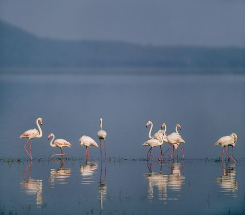 kenya_birds15.jpg
