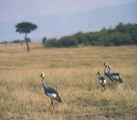 kenya_birds16.jpg