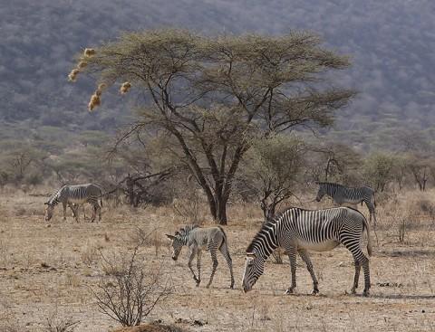 Kenya-horses-021.jpg