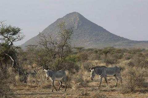 Kenya-horses-023.jpg