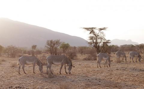 Kenya-horses-024.jpg