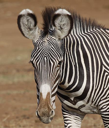 Kenya-horses-025.jpg