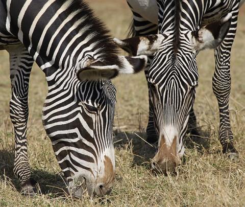 Kenya-horses-026.jpg