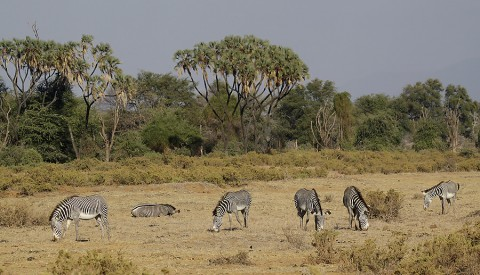 Kenya-horses-028.jpg