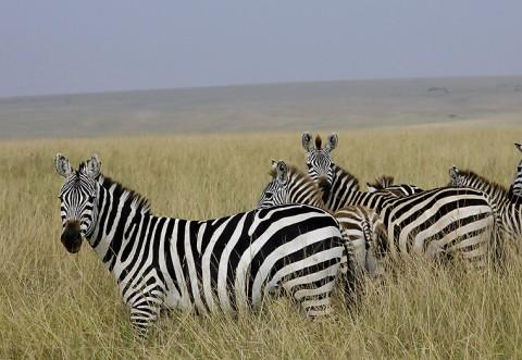 Kenya-horses-031.jpg