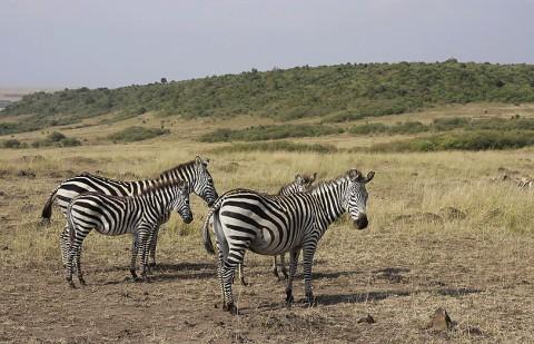Kenya-horses-032.jpg