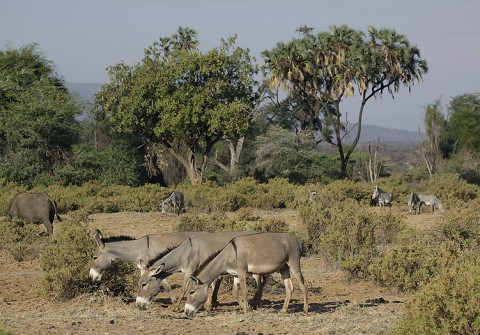 Kenya-horses-041.jpg