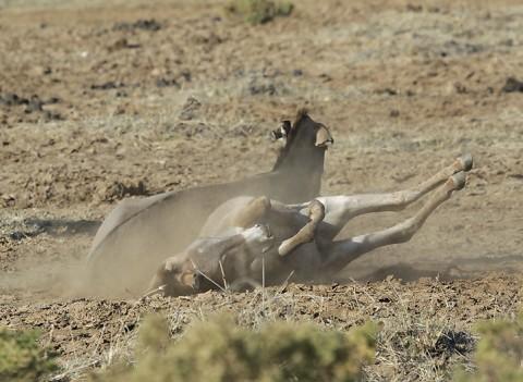 Kenya-horses-043.jpg