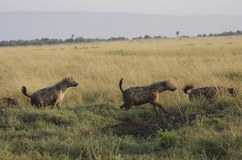 kenya-carnivore-051.jpg