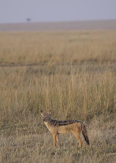 kenya-carnivore-072.jpg