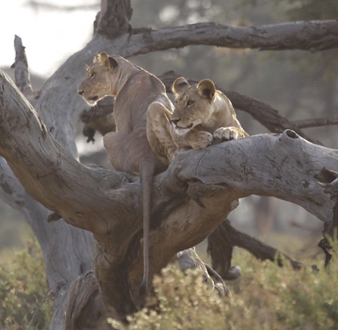 Kenya-carnivore-021.jpg