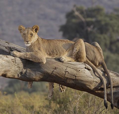 kenya-carnivore-022.jpg