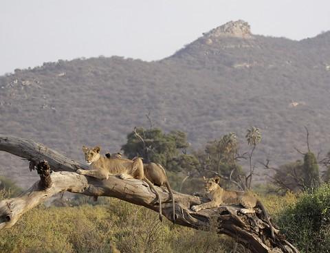 kenya-carnivore-023.jpg