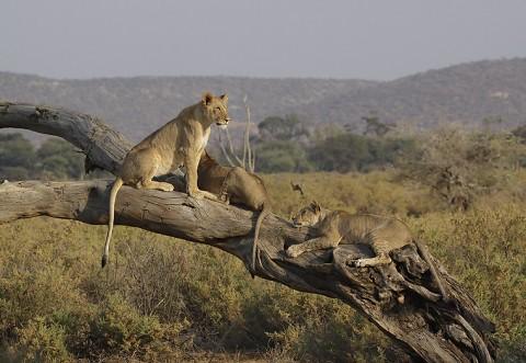 kenya-carnivore-024.jpg