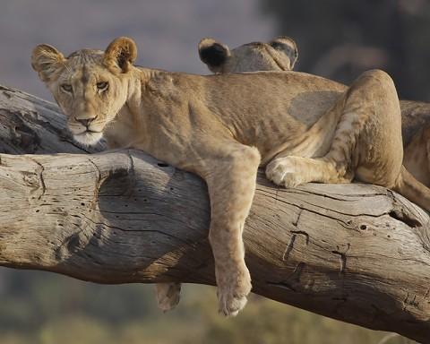kenya-carnivore-026.jpg