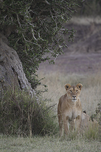 kenya-carnivore-030.jpg
