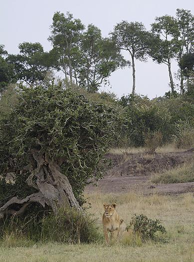 kenya-carnivore-031.jpg