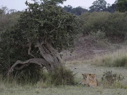 kenya-carnivore-032.jpg