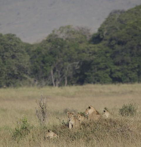 kenya-carnivore-035.jpg