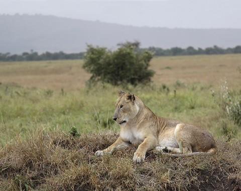 kenya-carnivore-036.jpg