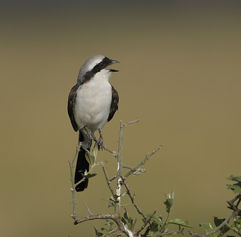 Kenya-otherbirds-026.jpg