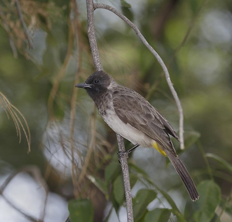Kenya-otherbirds-030.jpg