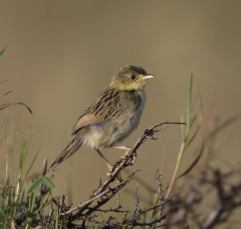 Kenya-otherbirds-034.jpg