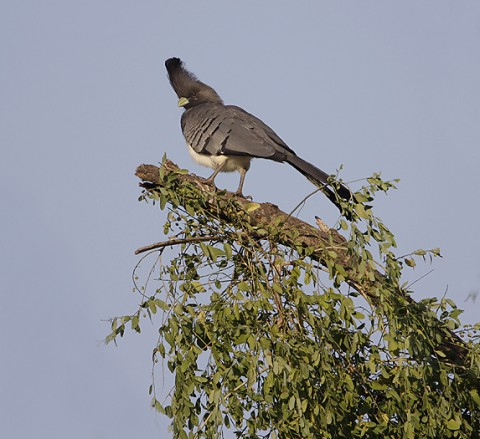 Kenya-otherbirds-038.jpg