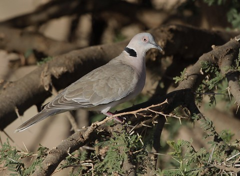 Kenya-otherbirds-046.jpg