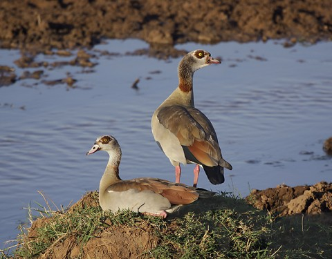 Kenya-otherbirds-048.jpg