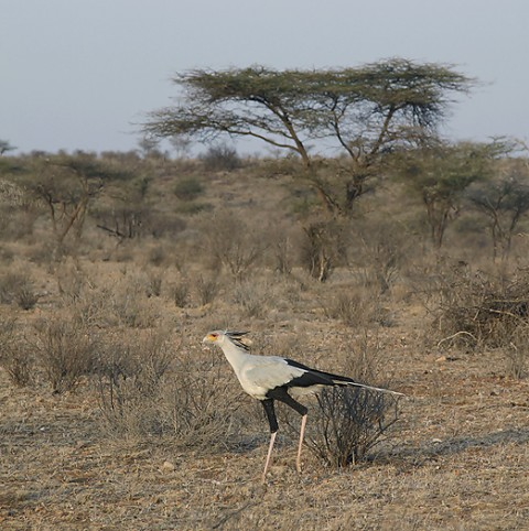Kenya-otherbirds-055.jpg