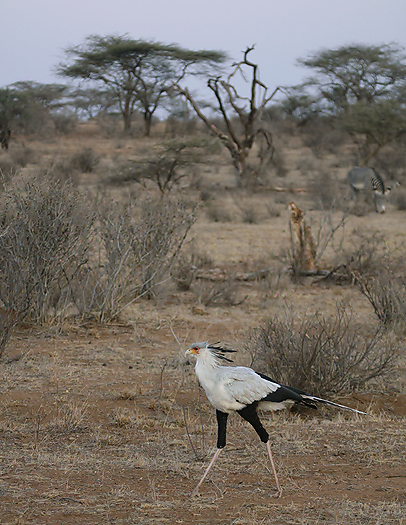 Kenya-otherbirds-056.jpg