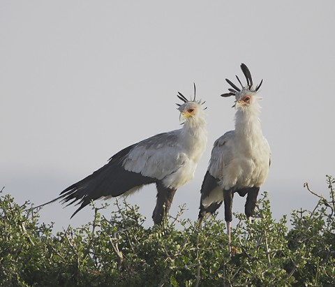 Kenya-otherbirds-057.jpg