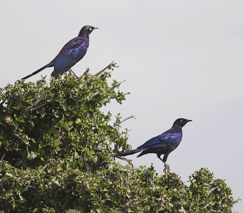 Kenya-otherbirds-058.jpg