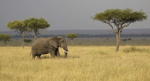 Kenya-othermammals-022.jpg