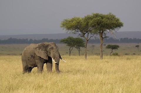 Kenya-othermammals-023.jpg