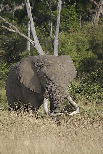 Kenya-othermammals-025.jpg