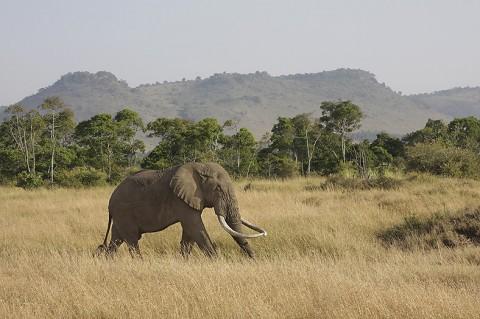 Kenya-othermammals-026b.jpg