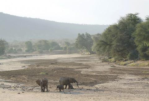Kenya-othermammals-028.jpg