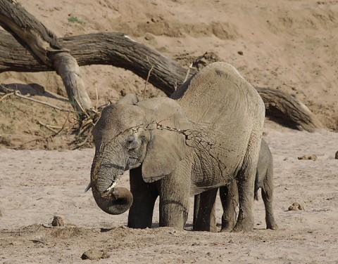 Kenya-othermammals-030.jpg
