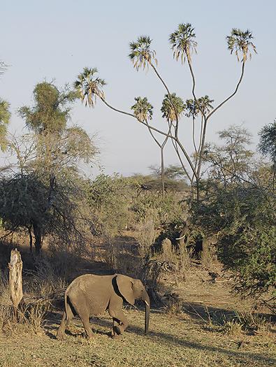 Kenya-othermammals-031.jpg